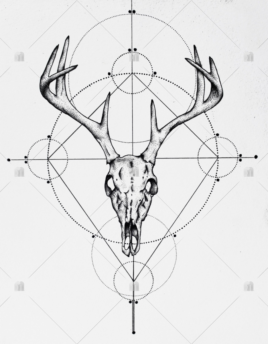 936x1200 Deer Skull Drawing, Deer, Skull, Drawing Art Print Sunshineestes