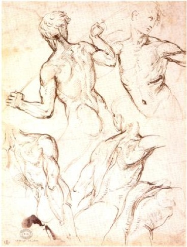 368x487 Raphael, Five Studies Of A Male Torso, 1504 08. Pen And Ink Over