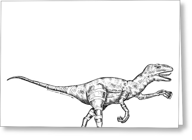 646x470 Raptor Drawing By Karl Addison