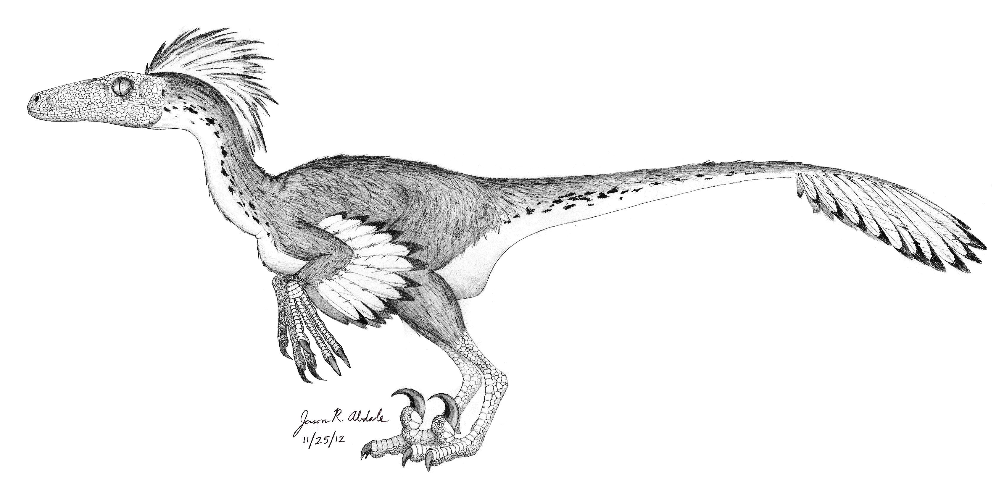 baby velociraptor coloring pages | Raptor Dinosaur Drawing at GetDrawings.com | Free for ...