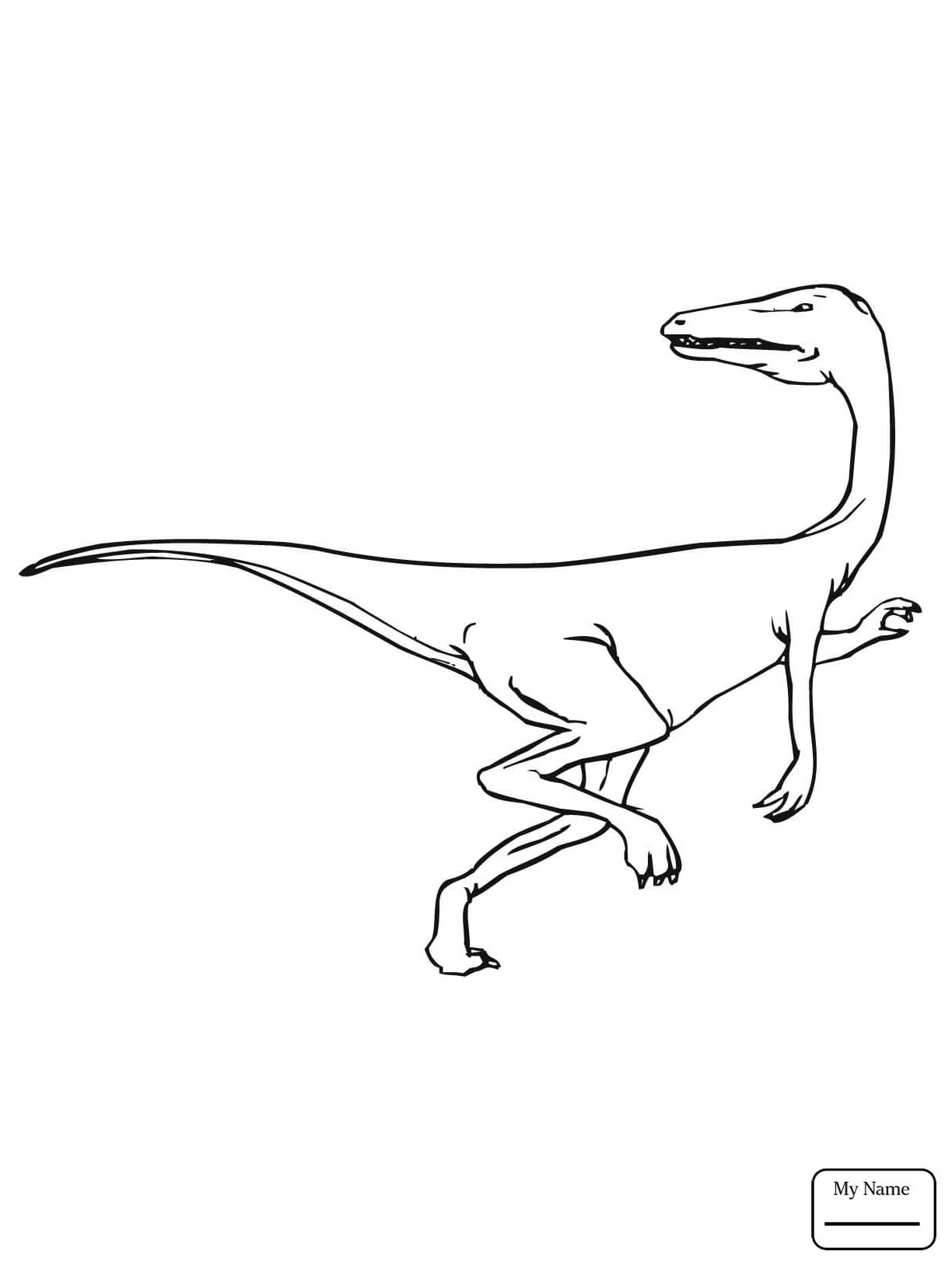 1224x1632 Velociraptor Dinosaurs Dinosaur Velociraptor Coloring Pages