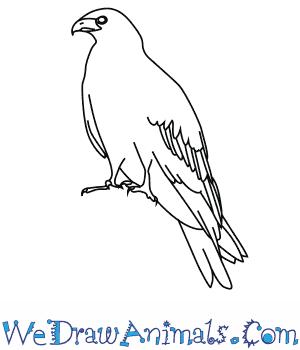 300x350 How To Draw A Black Kite