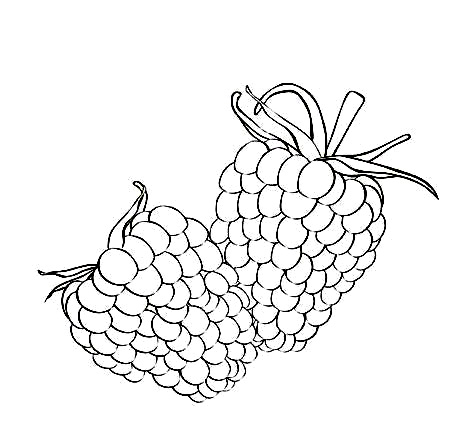 472x446 Free Raspberry Coloring Pages Pictures Color Udin
