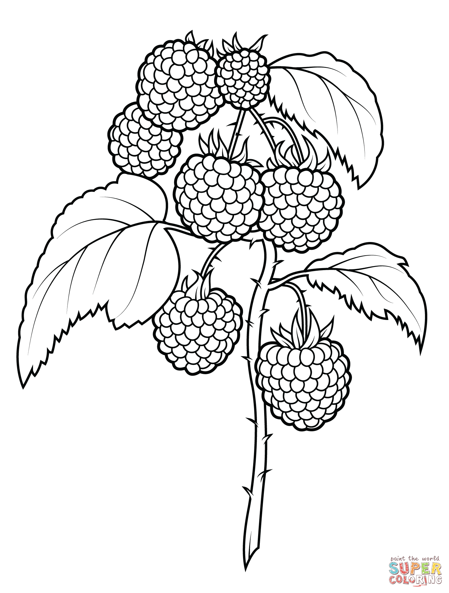 1550x2046 Raspberries Super Coloring Coloring Raspberry