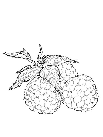 360x480 Raspberries Coloring Page Free Printable Coloring Pages