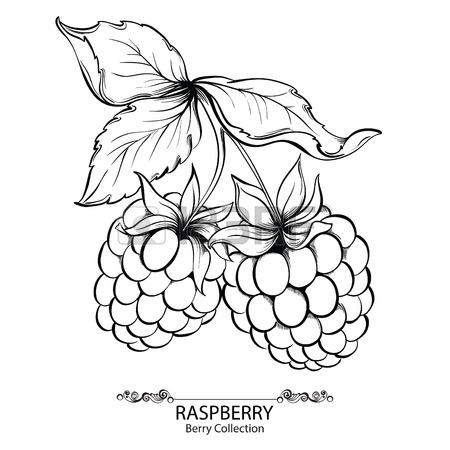450x450 Raspberry Drawing Stock Photos. Royalty Free Raspberry Drawing