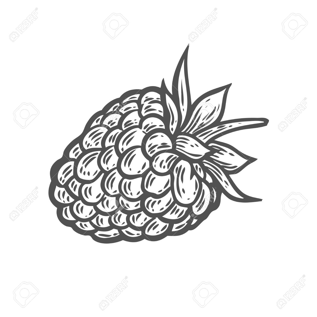 1300x1300 Raspberry Fruit. Superfood Organic Berry. Hand Drawn Vector Sketch