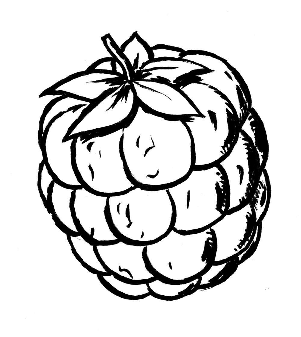 Raspberry Drawing