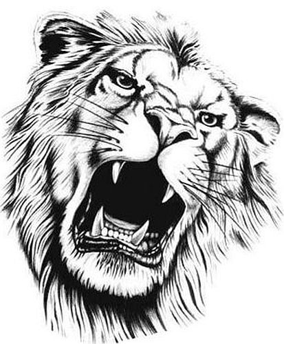 413x500 7 Best Lion Images On Drawings, Lion And Lion Art