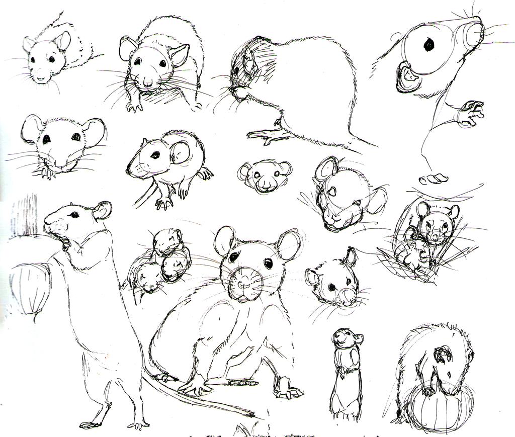 1024x869 Hoe Teken Je Een Rat. Draw Me Rats, Drawings