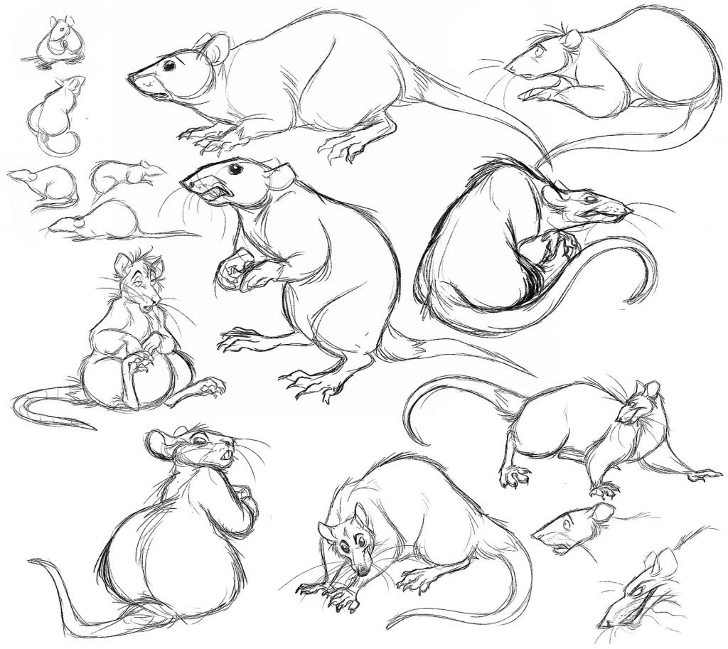 1024x913 How To Draw A Rat Rat Drawing Related Keywords Amp Suggestions Rat