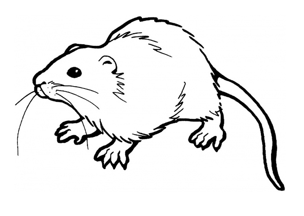1050x746 Inspiring Rat Coloring Pages 86 About Remodel Line Drawings With
