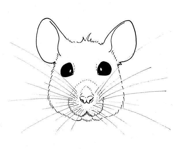 how to draw a rat face