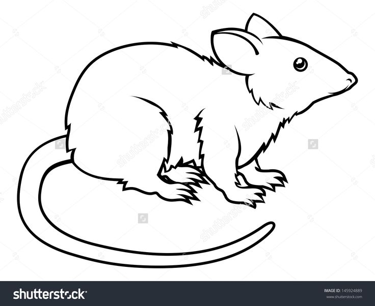 736x602 43 Best Rat Outline Tattoo Images On Outline, Rat