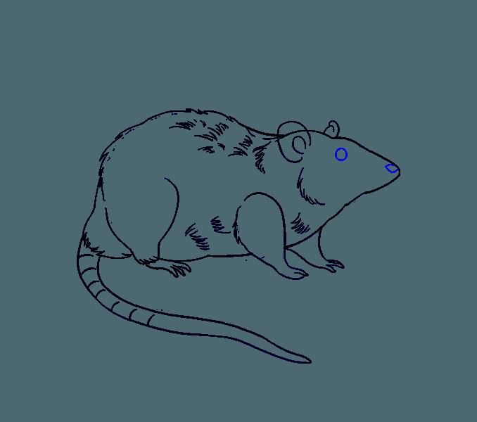 678x600 Draw Rat How To Draw A Rat Step Step Arcmel Ideas