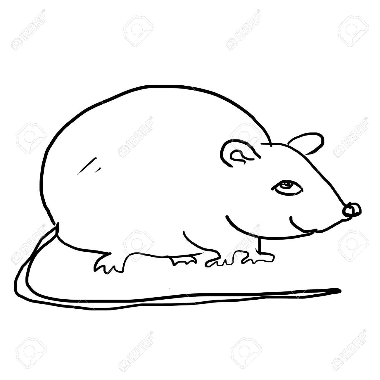 1300x1300 Drawing Of Rat On The White Stock Photo, Picture And Royalty Free