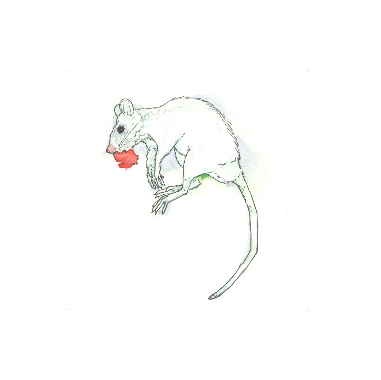 1500x1495 Drawn Rat Hooded
