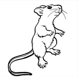 266x263 Rat Safety