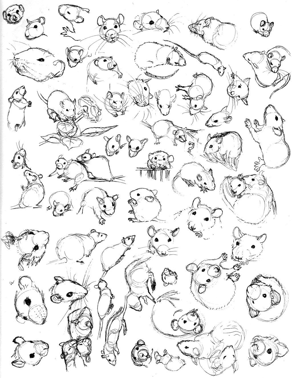 1024x1324 Rat Sketch Practice 4 By Never Mor On Rats