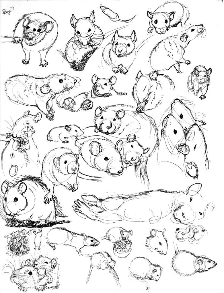 781x1024 Rat Sketch Practice 7 By Never Mor