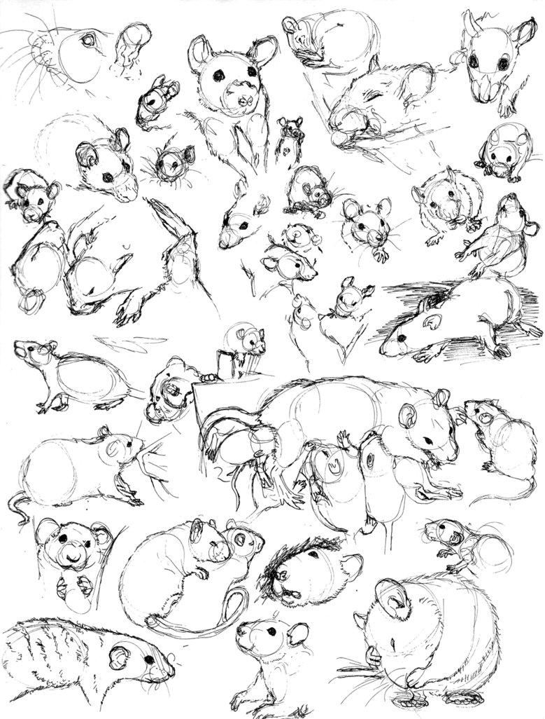 779x1026 Rat Sketch Practice 8 By Never Mor Banda Desenhada Ratos