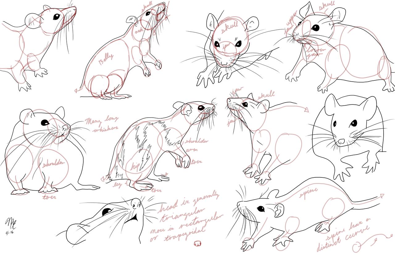 1280x828 Rat Study 3 By Moon Apprentice