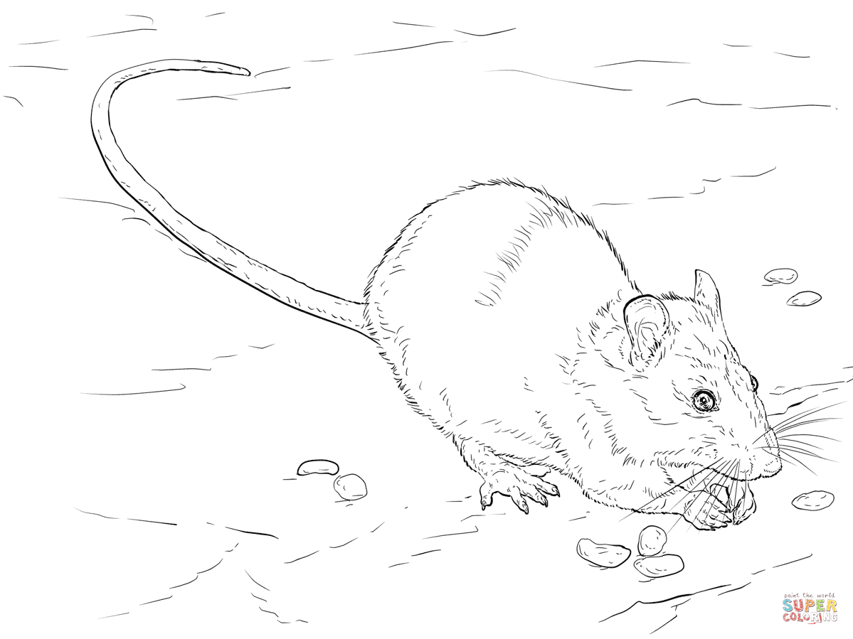 1199x899 Brown Rat Coloring Page Free Printable Coloring Pages