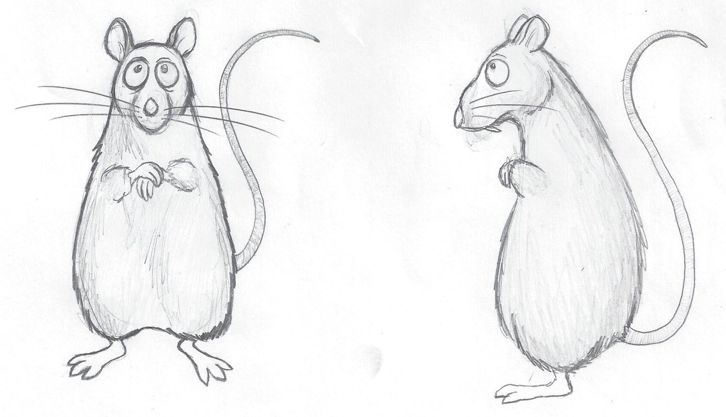 1497x859 Enjoy. Draw Rat 18. Rat Sketch. Rat Sketch. Rat Sketch Practice By