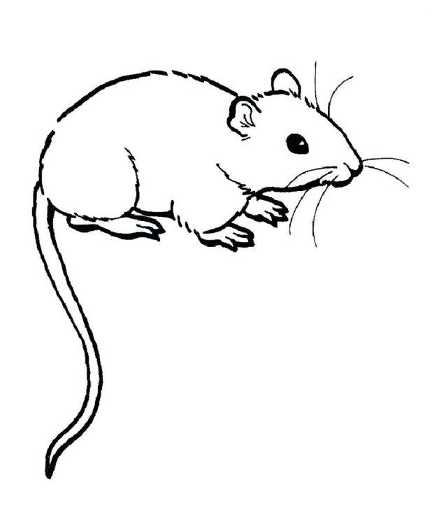 618x732 Coloring Pages Fabulous Rat Coloring Pages Rat Coloring Pages