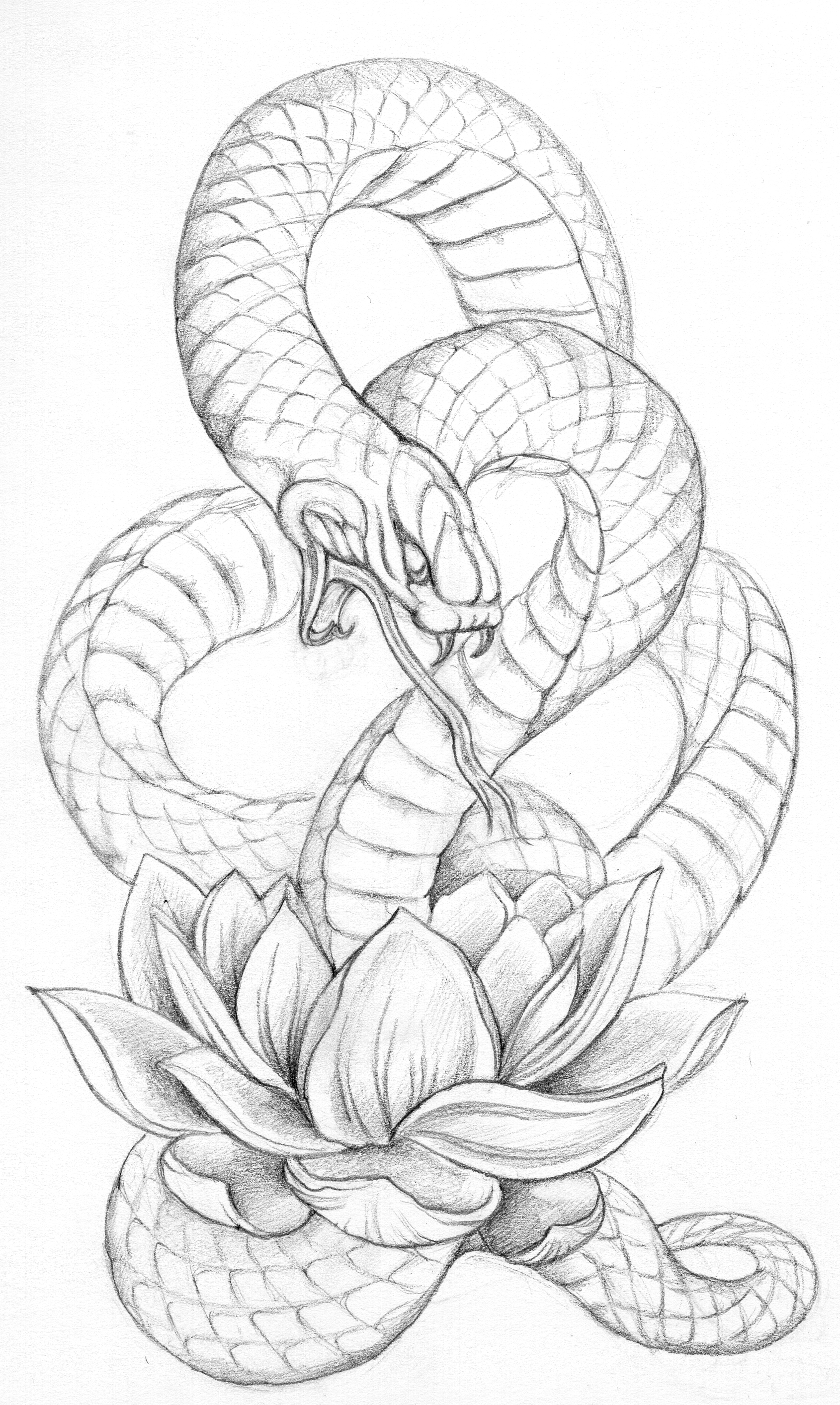 1690x2825 Snake Sketch Turn This Into A Tattoo By Having The Tail Wrap