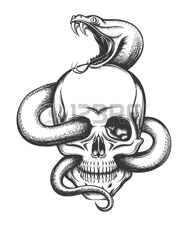 Rattlesnake Head Drawing