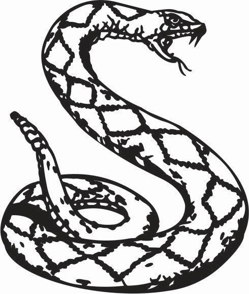 490x578 Curled Up Snake Hissing Python Car Decal Sticker Ebay