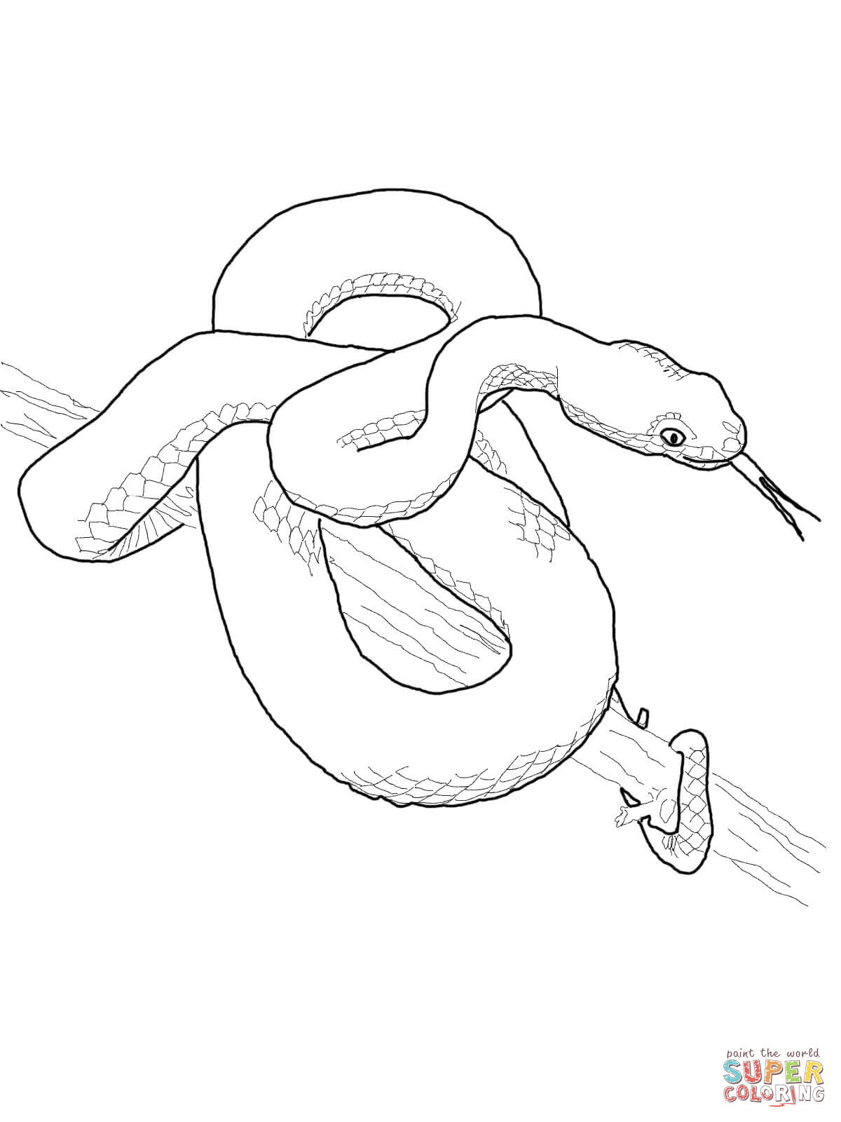 1200x1600 Northern Copperhead Snake And Timber Rattlesnake Coloring Page