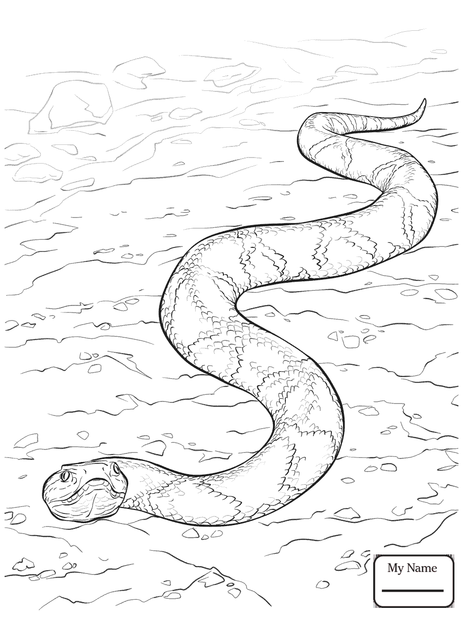 water snake coloring pages - photo#38