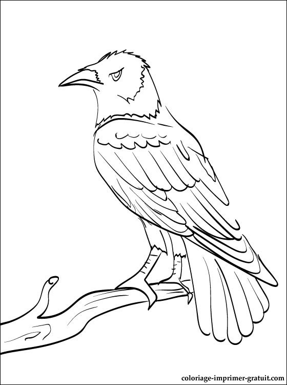 560x750 Raven Bird Coloring Page Raven Bird Drawings