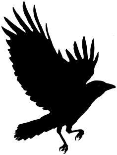 236x312 Crow Drawings