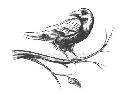 450x327 Drawing Crow Stock Vectors, Royalty Free Drawing Crow