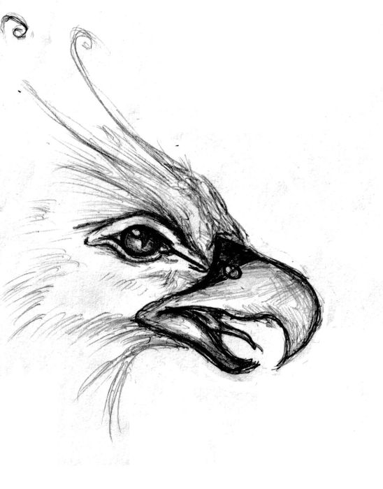 548x700 Love The Eyes, Beak Is Too Similar To An Eagle Or Some Other
