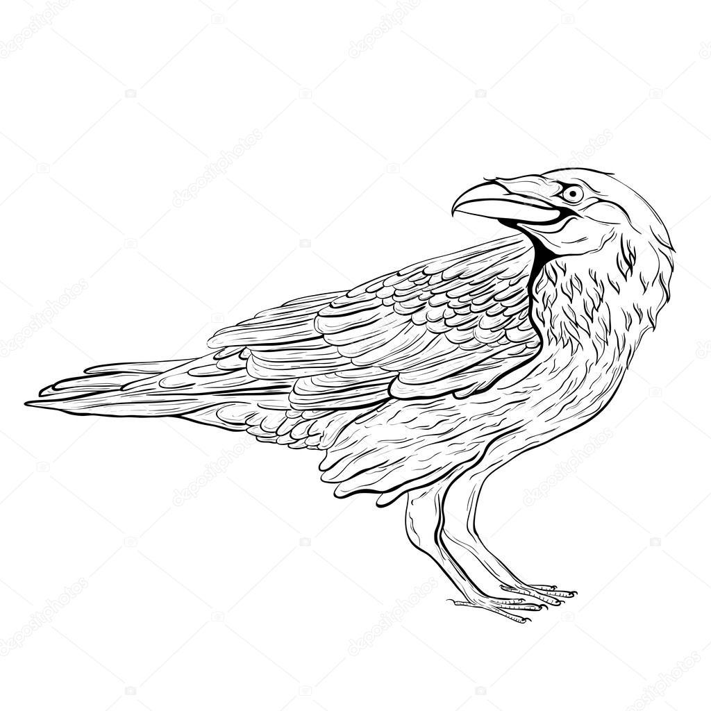 1024x1024 Black Raven. Sketch Bird Stock Vector Steshicart