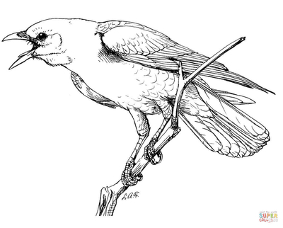 400x322 Crow To Print Coloring Pages Perched American Page