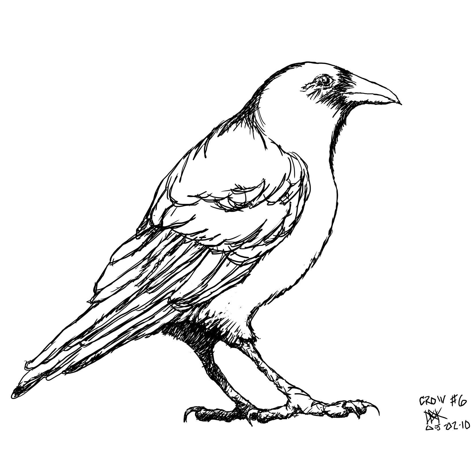 1650x1650 Crow Drawing