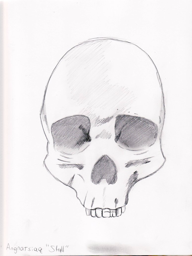 775x1031 Skull Sketches 1 Of 5 By Dreamer Of Ravens