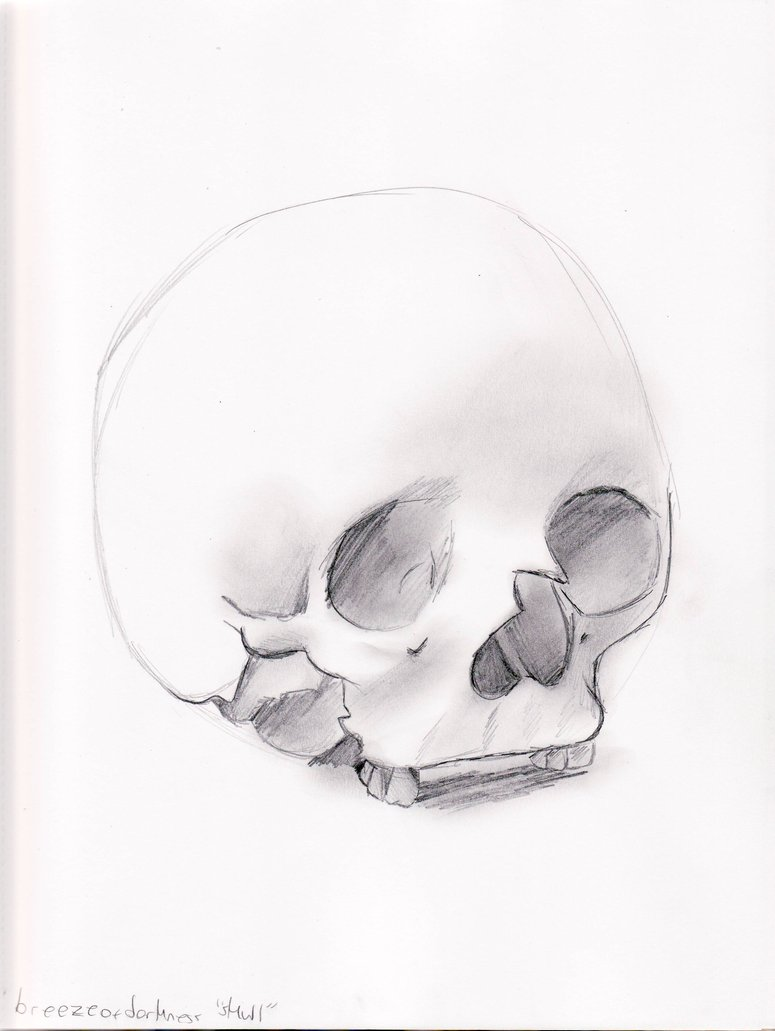 775x1031 Skull Sketches 4 Of 5 By Dreamer Of Ravens