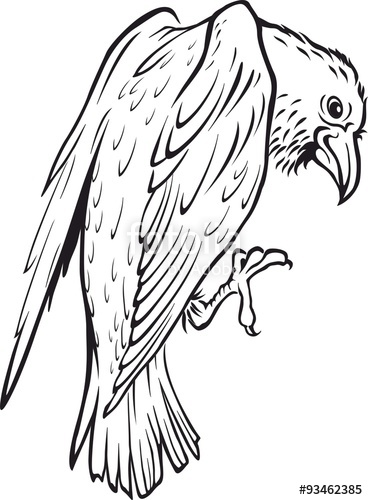 368x500 Sketch Of A Raven. Crow. Vector Illustration. Tattoo Style. Stock