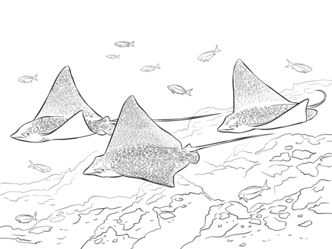 480x360 Spotted Eagle Rays Coloring Page Free Printable Coloring Pages