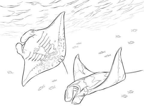480x360 Two Manta Rays Coloring Page Free Printable Coloring Pages
