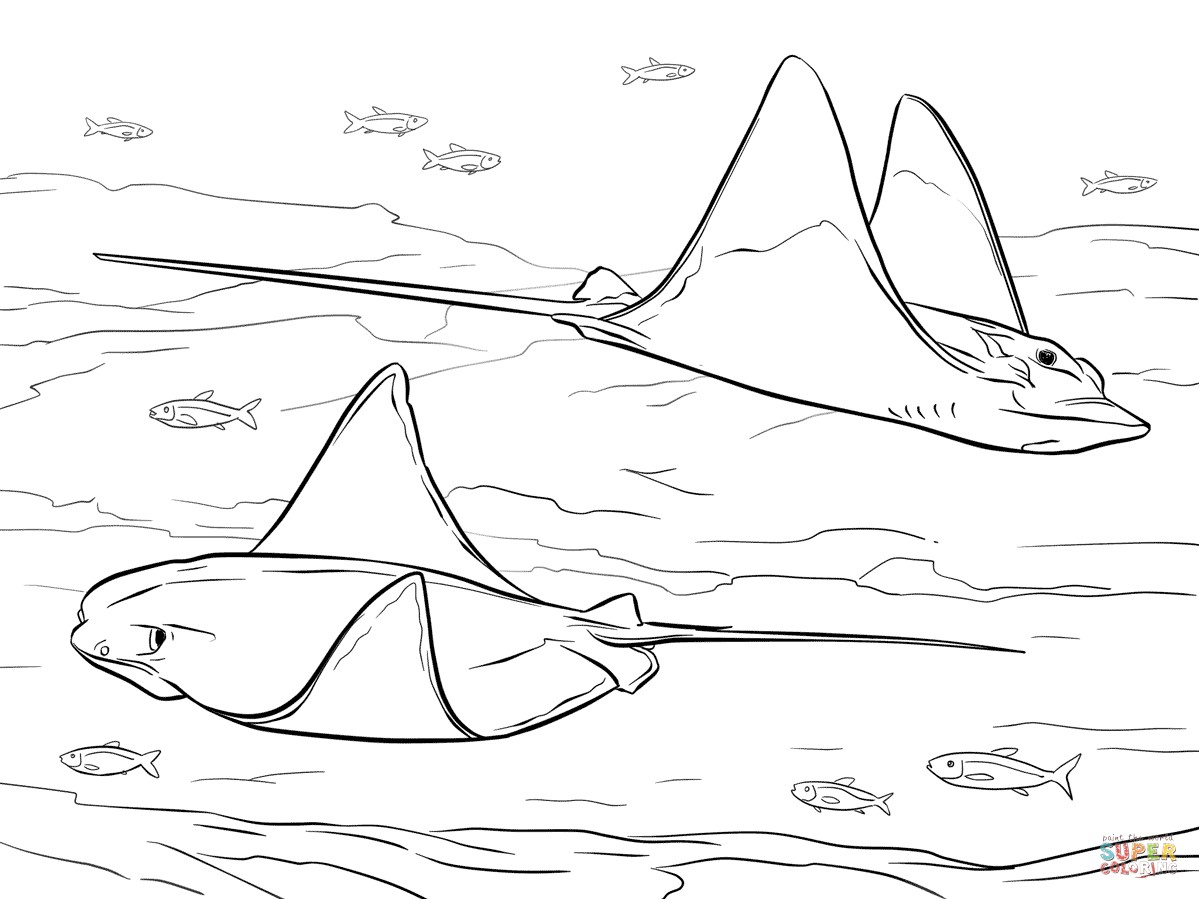 1199x899 X Ray Fish Coloring Page Copy Cownose And Bull Eagle Rays Coloring