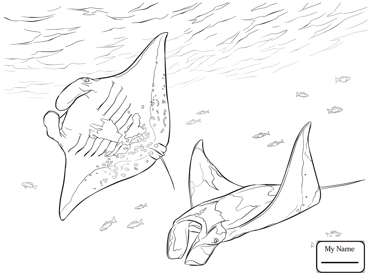 1223x917 Coloring Pages Ray Skate Fish Fish