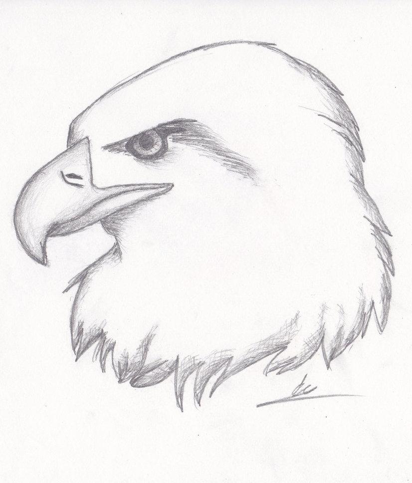 826x968 Realistic Eagle Sketch By Nightkitsune9