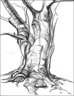 236x305 Tree Drawing Visually Appealing Drawings, Sketches
